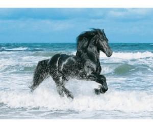 Clementoni Black Horse