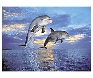 Clementoni Dolphins (500 pieces)