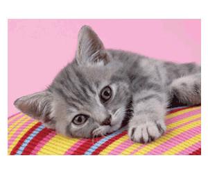 Clementoni Grey Kitten