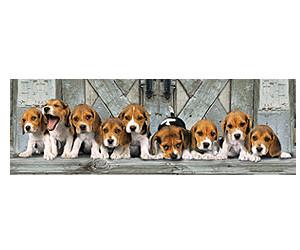 Clementoni Beagles (1.000 Teile)
