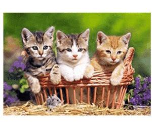 Castorland Three Lovely Kittens