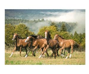Castorland Wild Horses