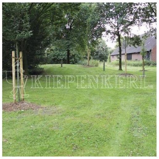 Kiepenkerl Trockenrasen ohne Kräuter RSM 7.2.1  1 kg für 50 m² (801509-1)