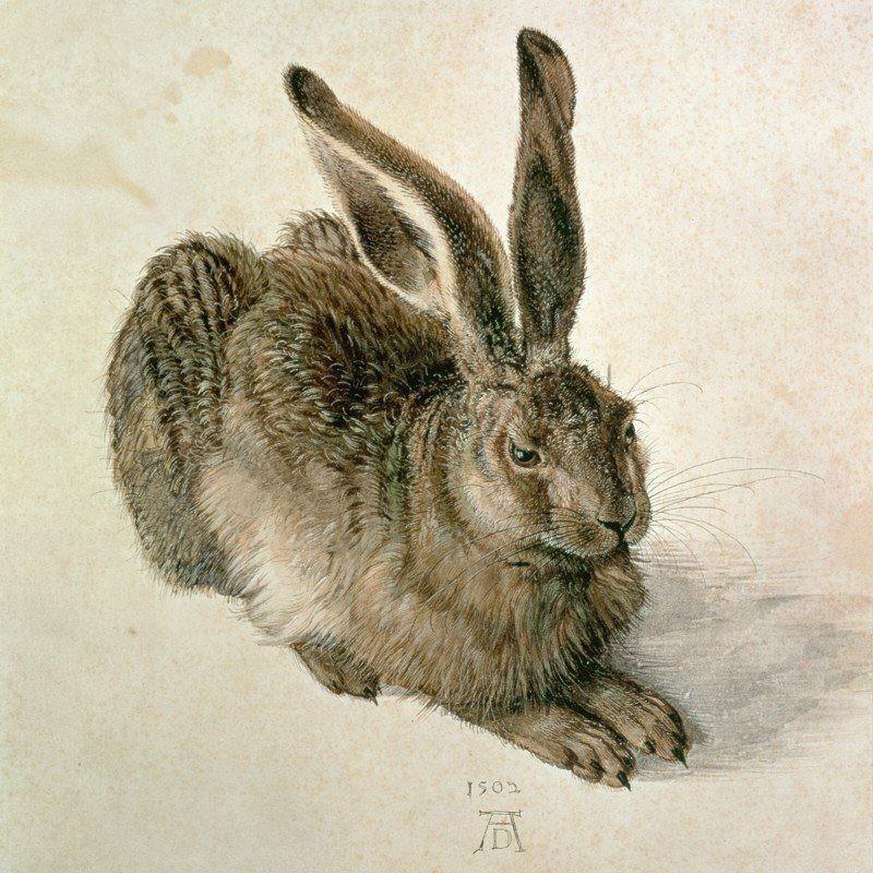 Art-Land Dürer, Albrecht Feldhase