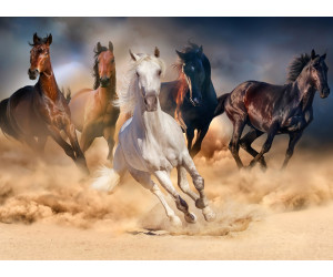 PaperMoon Horse Herd in Gallop 400 x 260 cm