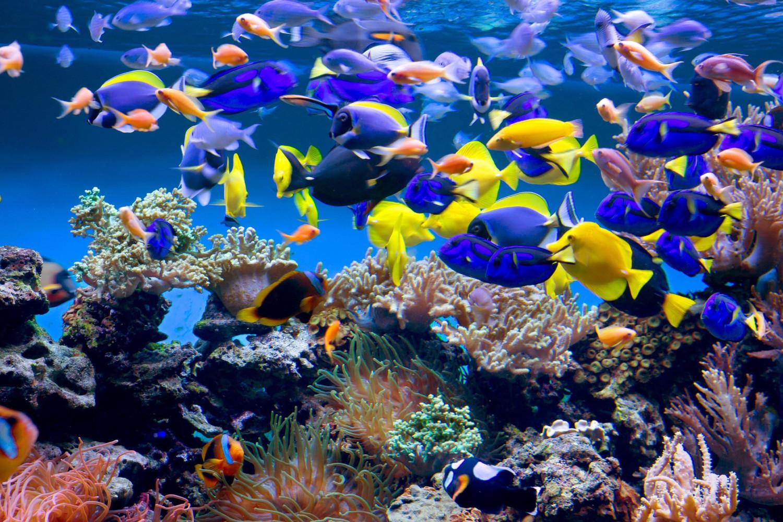 PaperMoon Aquarium 400 x 260 cm