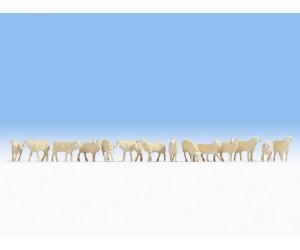 Noch Schafe (15749)