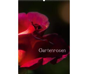 Calvendo Gartenrosen DIN A2 2021
