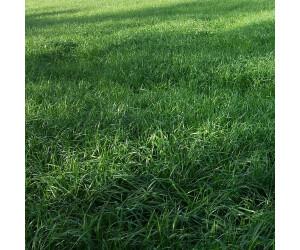Freudenberger Welsches Weidelgras (Lolium multiflorum) ORYX(d) (25kg)