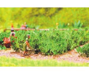 Noch H0 - Laser minis Zucchini - 10 Pflanzen (14112)