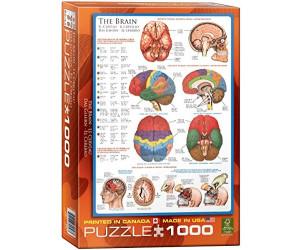 Eurographics Puzzles Das Gehirn