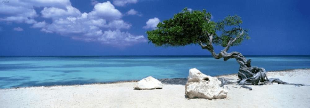 Heye Divi Divi Tree (1.000 Teile)