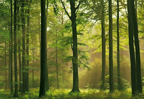 1art1 Fototapete Wälder - Herbst-Wald 8-teilig ...
