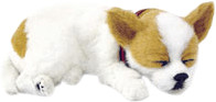 CD3 Perfect Petzzz - Chihuahua Welpe 25 cm