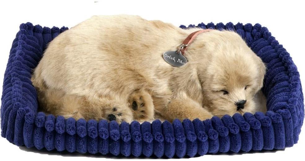 CD3 Perfect Petzzz - Golden Retriever Puppy