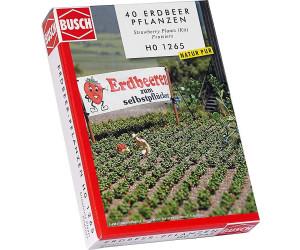 Busch Erdbeerpflanzen (1265)
