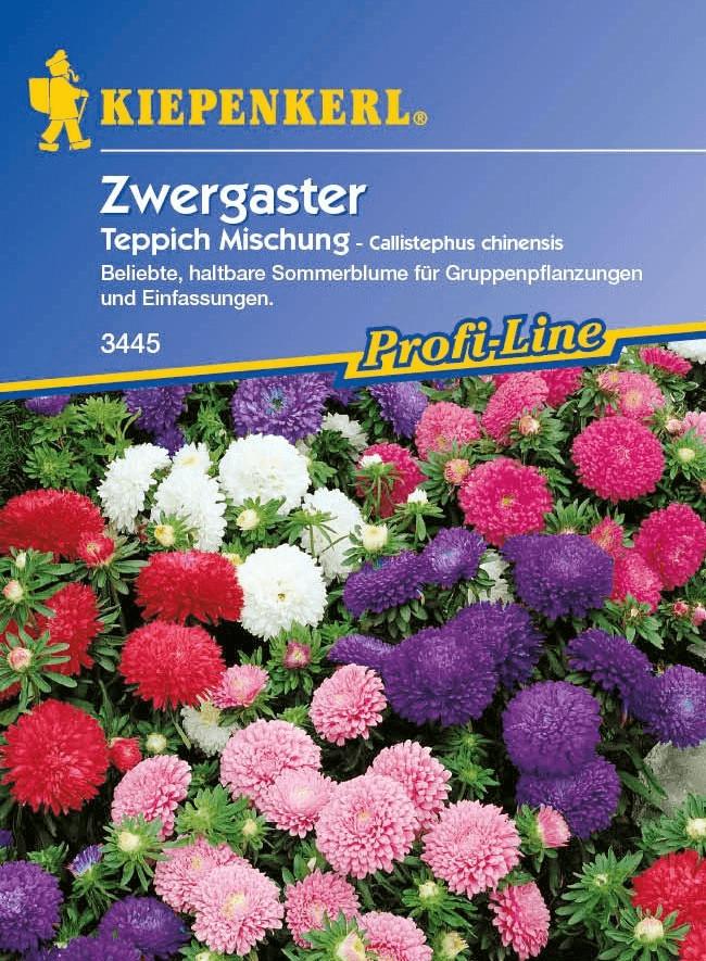 Kiepenkerl Zwergaster Teppich Mischung