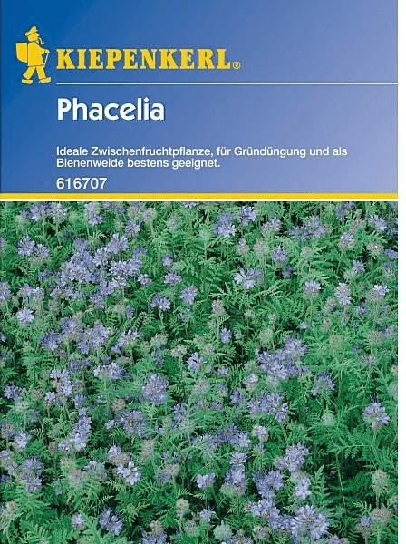 Kiepenkerl Phacelia
