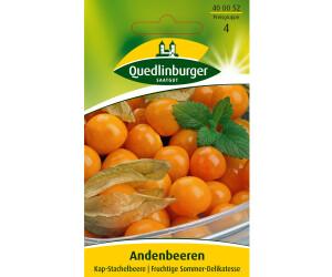Quedlinburger Saatgut Andenbeere Kapstachelbeere
