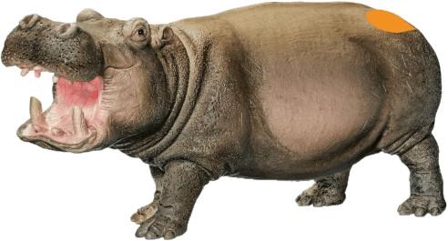 Ravensburger Tiptoi Spielfigur Flusspferd