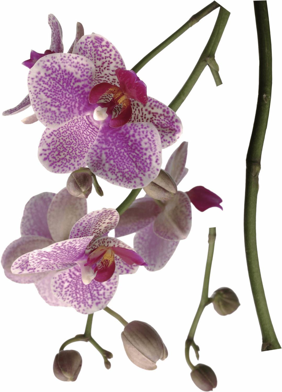 Komar Wandtattoo Orchidee (17702)
