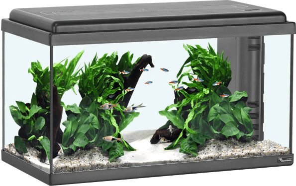 Aquatlantis Advance LED 60