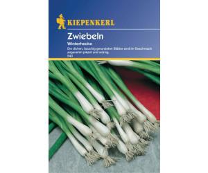 Kiepenkerl Zwiebel Winterhecke