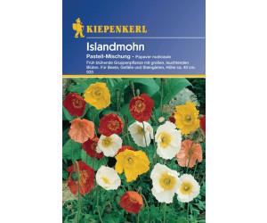 Kiepenkerl Islandmohn