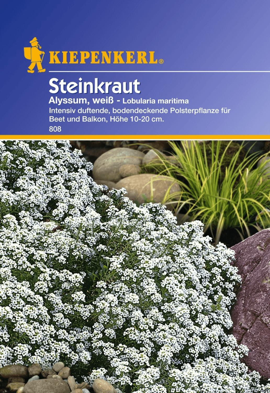 Kiepenkerl Steinkraut