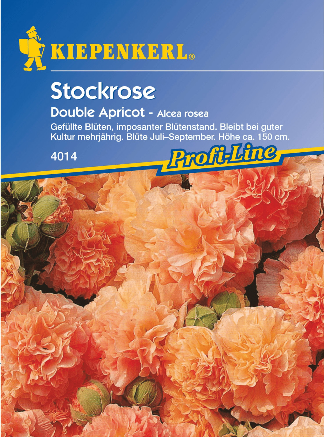 Kiepenkerl Stockrose ´´Chaters Double Apricot´´