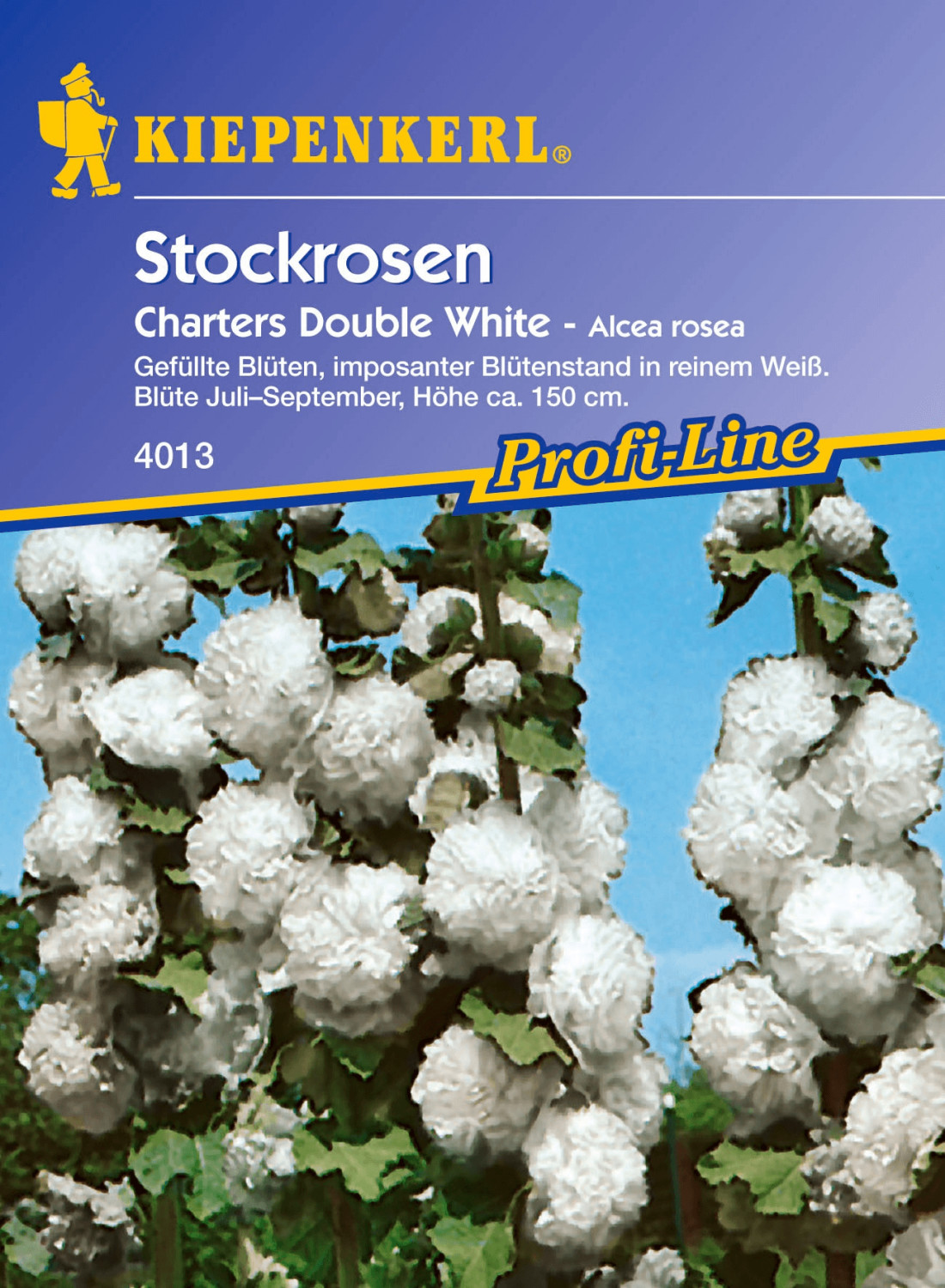 Kiepenkerl Stockrose ´´Chaters Double White´´