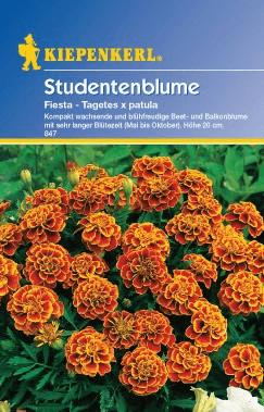Kiepenkerl Studentenblume