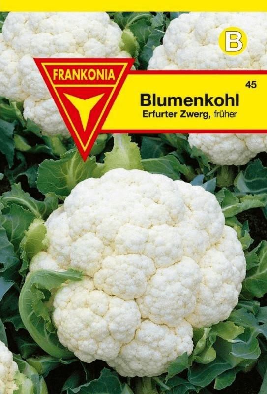 Frankonia Blumenkohl Erfurter Zwerg