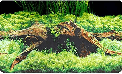 Hobby Fotorückwand Zuschnitt Spring/Moss SB (31...