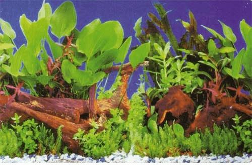 Hobby Fotorückwand-Zuschnitt Pflanzen 1/5 SB (3...
