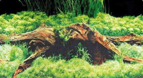 Hobby Fotorückwand-Zuschnitt Spring/Moss SB (31...