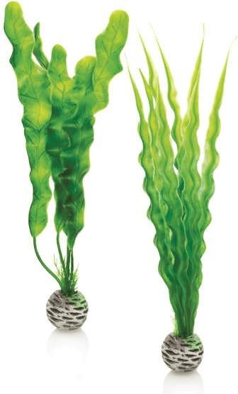 biOrb Pflanzen Set mittelgroß grün (46056)