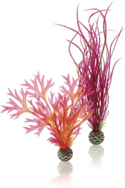 biOrb Pflanzen Set mittelgroß rot & pink (46058)