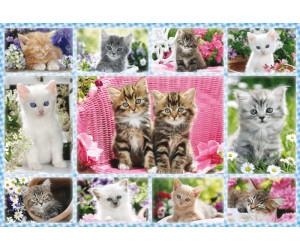 Katzenbabys von mir zeig bilder Katzen