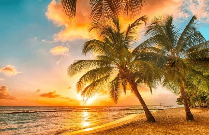 PaperMoon Barbados Palm Beach 250 x 180 cm