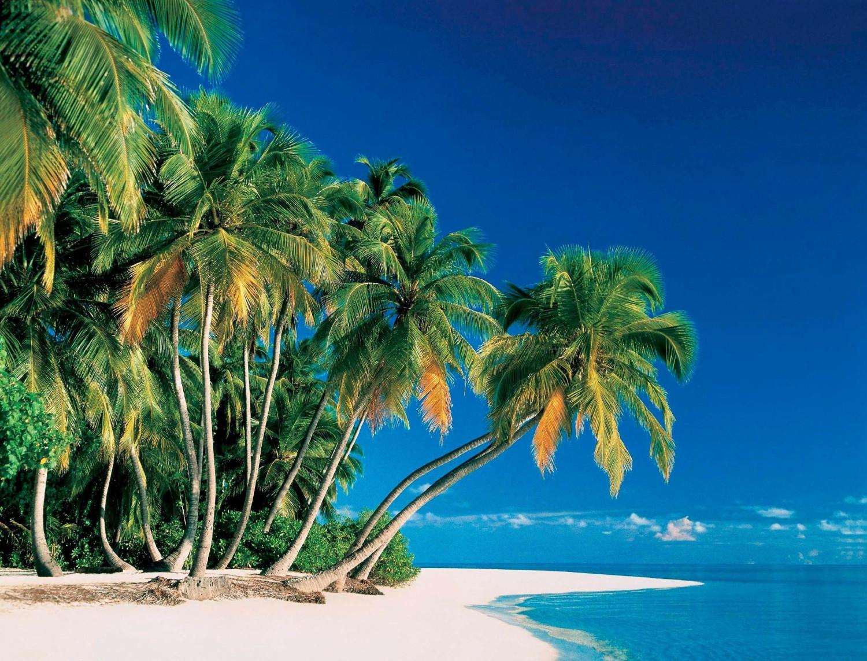 PaperMoon Tropical Palms 350 x 260 cm