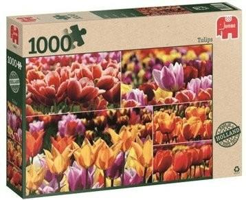 Jumbo Holländische Tulpen