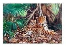 Castorland Jaguar im Wald