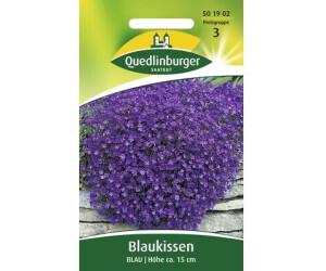 Quedlinburger Saatgut Blaukissen 'Blau'