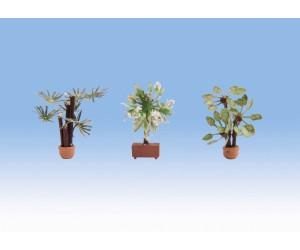 Noch Mediterrane Pflanzen (14023)