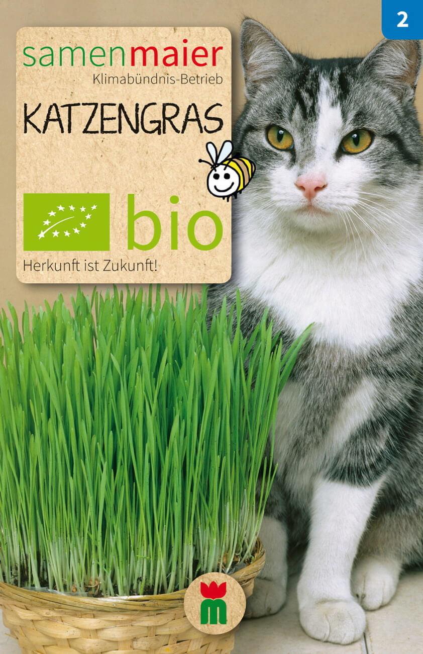 Samen Maier BIO Katzengras