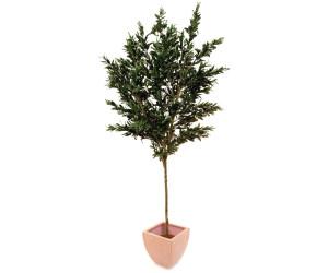 Europalms Olivenbaum Olivenbaum mit Früchten 250cm