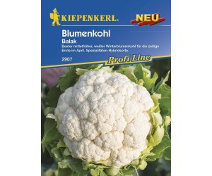 Kiepenkerl Balak Blumenkohl